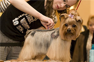 парикмахер для собак